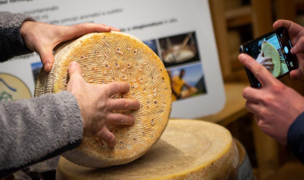dimostrazione del processo di foratura di un formaggio erborinato e delle sue muffe buone