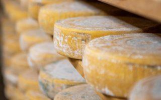 formaggi di malga durante il processo di stagionatura disposti su assi di legno