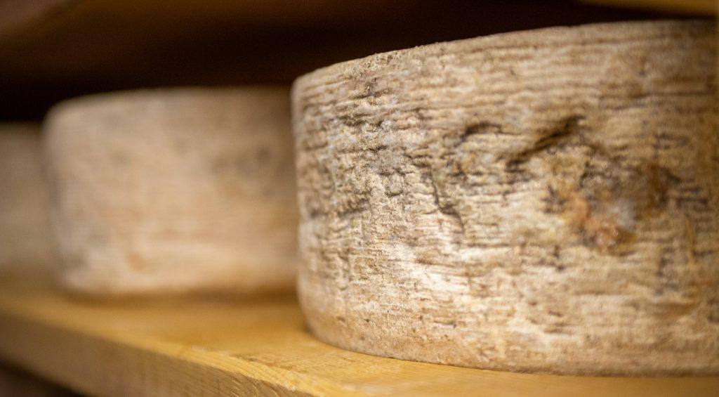 muffe peniciullum su formaggio di malga durante il processo di stagionatura